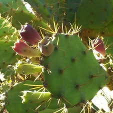 Cactus enjoying the Sun in La Alameda/ Botanical Gardens of Gibraltar